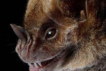 bat faces