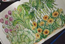 coloring inspiracion