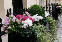 Window Boxes Plants
