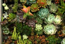 Mini garden succulents / by Vickie Moews