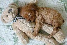 Love Animals / bir ev dolusu istiyorum bunlardan.Aşığım .)