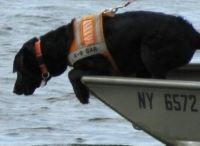 K-9s/Search and Rescue