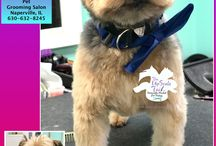 Yorkshire Terriers / All breed grooming at our salon