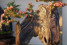 Trees - Bonsai