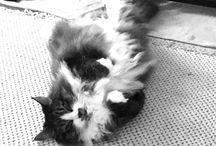 My cat, THE CAT