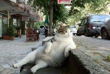 cat-gasm