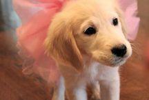 puppy's ❤️
