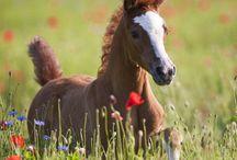 Dieren / Cute!!! Animals