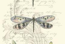 libélulas  .... borboletas...