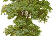 Pohon/RUMPUT2AN