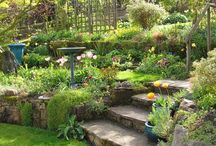 Garden and patio ideas