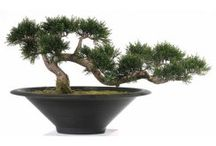 Artificial Bonsai Trees / Real Bonsai Trees are difficult to achieve and maintain, at Red Hot Plants we have sourced premium quality artificial Bonsai plants that beautifully replicate the real thing.  Choose from artificial pine or cedar bonsai and we also have a stunning miniature Acer tree in all the shades of Autumn.  These artificial bonsai also make a fantastic gift.