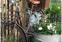 Bike in garden