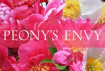 PEONY'S ENVY | Display Garden / The Nursery & Display Garden is located in Bernardsville, New Jersey within easy access of New York City and Philadelphia. The gardens are open to the public every year for plant sales and the peony bloom from May 1 to June 15, and again in the fall for bare root peony sales. The display gardens are laid out over an 8-acre property with trails that meander throughout the peony collections. Four major types of peonies are highlighted in the garden: woodland, tree, herbaceous, and intersectional.