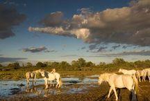 Camargue 35km du Camping Pegomas / constitue le deuxième plus grand delta du monde après le Nil et contient une surface de 820 km ² en parc naturel et réserve. #camargue #camping #pegomas #nature #tourisme #pleinair #tourismedurable