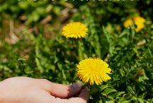 Wildblumen Rezepte