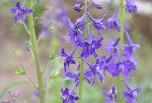 Backyard shade native flowers