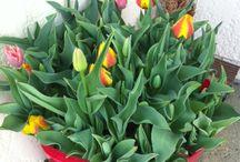 Fleurs / Jolies trucs en fleurs