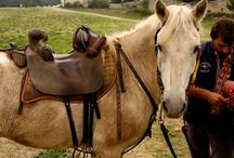 horse tack inspiration
