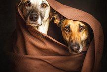 pets & puppies