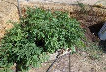 High Desert Gardening / How to grow veggies in the High Desert