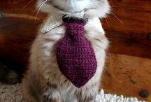 Leyya kedi