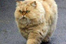 Katzenkram