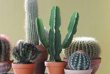 cactus <3