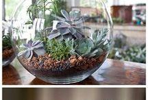 Minikert - virágok
