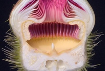Cross Section Flowers