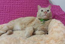 Kedim Oğluş