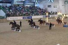 Cool Horse Videos