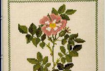 цв - розы, шиповник
