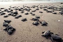 Sea Turtles / by Shuva Rahim