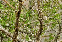Травы и деревья / О природе