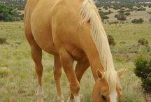 Hevoset*Horses