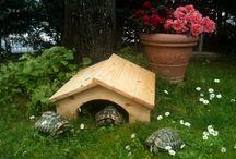 Casetta tartarughe