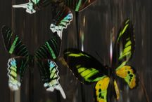 Naturalia / Diverse / We have a large range of decorative items