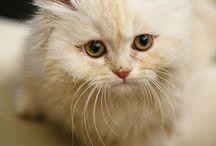 pisiciklerim :)