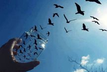 BIRDS wishing to fly...