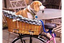 велосипед и животные