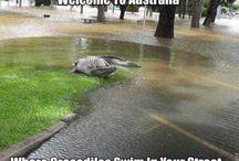 Aussie memes