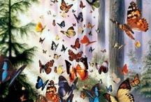 Butterflies  **Vlinders**