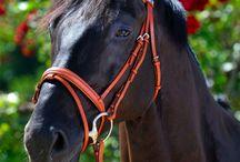 ♥ ♥ ♥ Horses