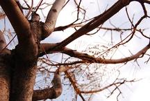 Legno e ancora legno