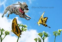 Dog - Fun Dog Photos / Pictures stylized with dogs having fun