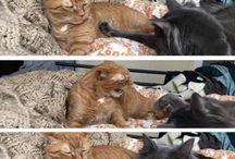 Hilarious cats
