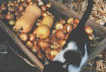 VESELICE / Okno do mého světa jídla, zahrady a okolí.  https://veselice.tumblr.com/