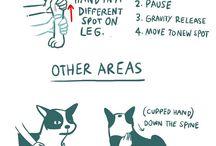 Koirajuttuja / Dog things
