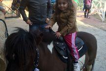 Reçine At Çiftliği